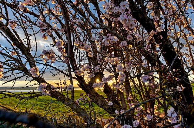Florece la primavera.