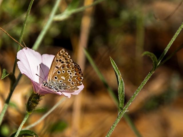 Mariposa en primavera.